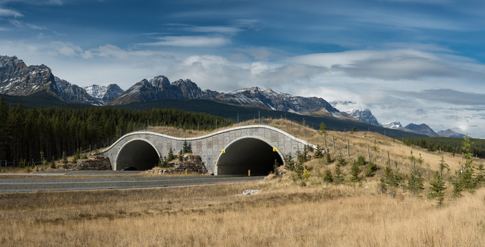 Wildlife Crossing Over the Trans Canada Highway