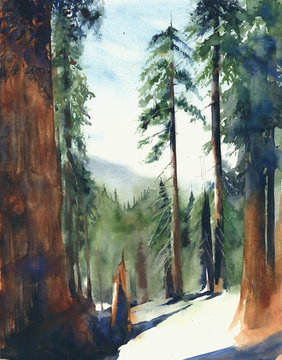 Forest big trees Sequoia national park landscape Sierra Nevada mountains watercolor painting illustration