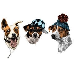 three dogs Jack Russell Terrier a set of Christmas gifts accessories fashion sketch vector graphics  drawing
