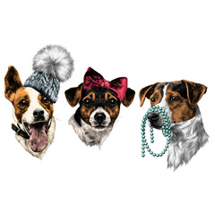three dogs Jack Russell Terrier a set of Christmas gifts accessories fashion sketch vector graphics color picture