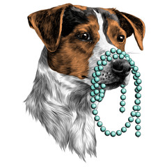 the dog with the beads in my mouth Jack Russell Terrier head sketch vector graphics color picture