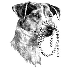 the dog with the beads in my mouth Jack Russell Terrier head sketch vector graphics monochrome black-and-white drawing