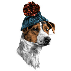 dog in hat and scarf Jack Russell Terrier head winter clothing sketch vector graphics color picture