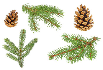 Set of fir branches and pine cones on a white background