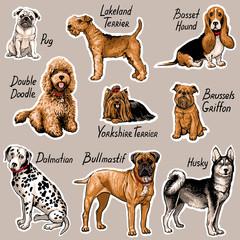 Set of dogs. Vector illustration.