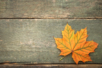 Dry maple leaf on grey wooden table