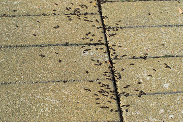 Many ants on the pavement of the city
