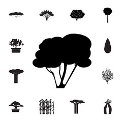 hazel tree icon. Set of silhouette of tree icons. Web Icons Premium quality graphic design. Signs, outline symbols collection, simple icons for websites, web design, mobile app