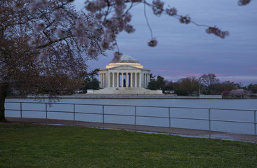 Cherry tree blossoms frame the Jefferson Memorial in Washington DC at sunrise