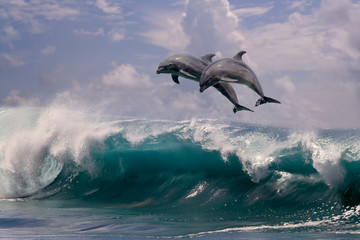 Foto op Plexiglas Dolfijn Two dolphins jumping from sea water over ocean wave