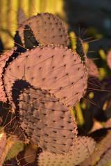 purple cactus thorns in sunlight