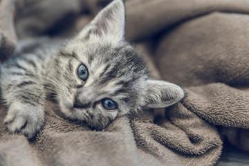 home living kitten