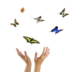 Monarch butterfly flying from hands