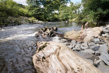Tree trunk in the river Lune makinga special waterfall