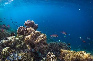 Coral reef and fish, Sawinggrai village, Raja Ampat, Indonesia