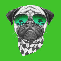 Portrait of Pug with sunglasses and scarf. Hand-drawn illustration.