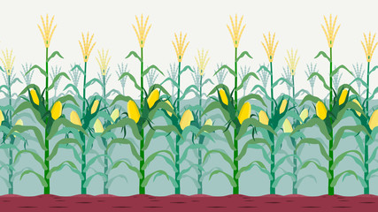 Seamless isolated cornfield