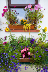 Window box with lobelia, daisies and geraniums