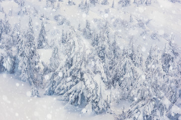 Christmas or New Year background, snow-covered firs with snowflakes on the mountain side
