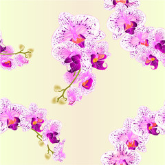 Seamless texture orchid Phalaenopsis purple and white   flowers tropical plants green stem and buds vintage vector botanical illustration for design editable hand draw
