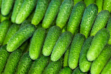 Many fresh green bio cucumbers at a local market or farmers shop. Vegetable cucmber background