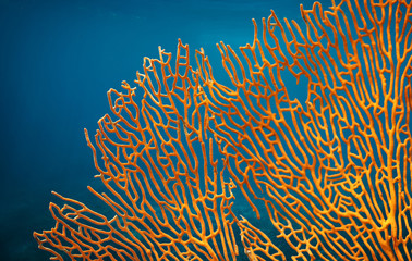 Garden Poster Under water Orange soft coral Subergorgia sp or Subergorgonia, marine life, close up underwater background