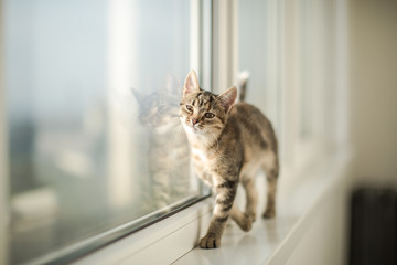 Little kitten playing at the window