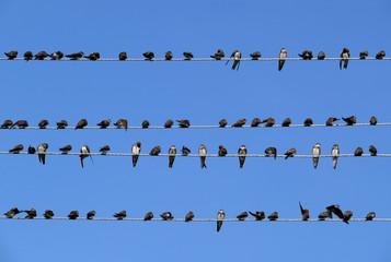 Birds sitting on a wire against the sky