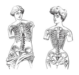 Thorax - Venus de Milo (left) and mannequin (right) / vintage illustration