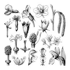 Flower collection / vintage illustration