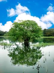 Bodhi tree in water