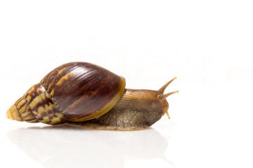 Snail on white background.