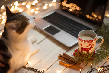 Wall Murals Christmas Freelancer's working place at home decorated for Christmas holiday. Cat sitting on the table.