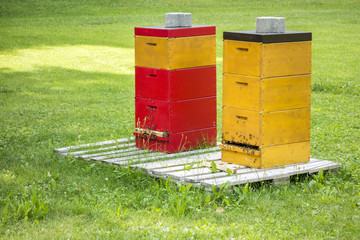 two bee hives in the green grass