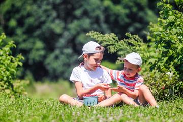 children eat raspberries on a farm. boys share berries