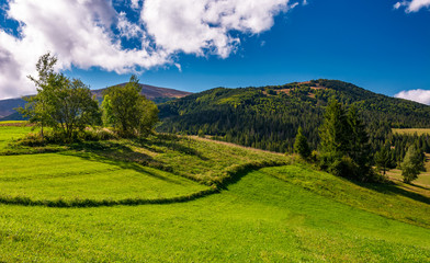 grassy field in mountainous rural area. beautiful countryside scenery with lovely sky on a summer day
