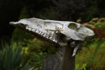 Deer skull-totem