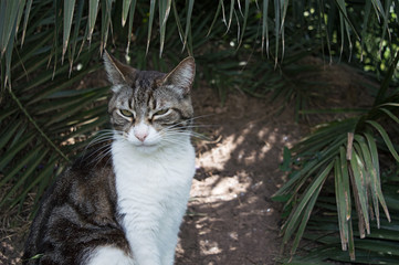 Homeless cat half asleep sitting under the palm trees in the park. Summertime