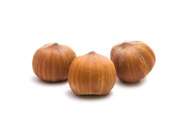 hazelnut nuts isolated