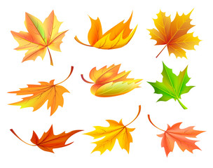 Fallen Golden Yellow Leaves Vector Illustration