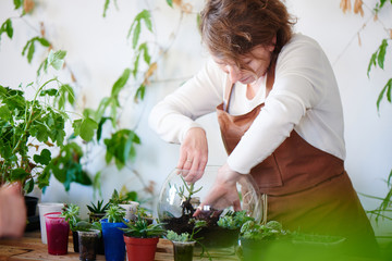 Botany. Woman florist grows house plants and flowers. Make a mini terrarium