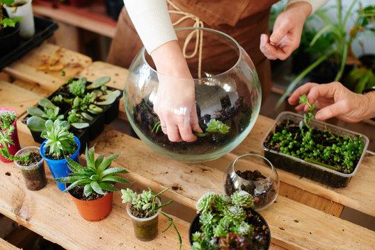 Women's hobby. Girl nerd florist make a mini terrarium with house plants