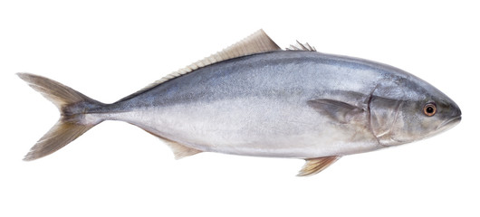 fish tuna Isolated on the white background