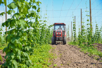 Hops field and tractor