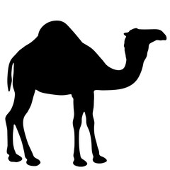 black and white vector silhouette of a camel