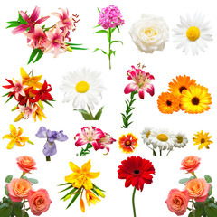 Collection of beautiful colorful flowers roses, irises, marigolds, daisies, lilies and other isolated on white background. Flat lay, top view