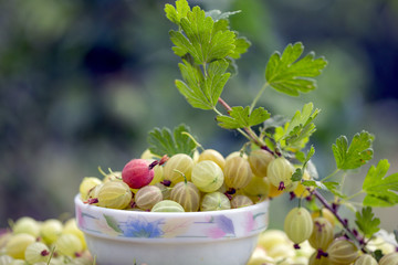 A lot of gooseberry on the table