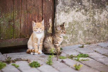wo little kittens are sitting on the street. Lovely pet