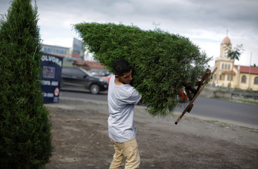 A man carries a Christmas tree after buying it from a street vendor in San Jose