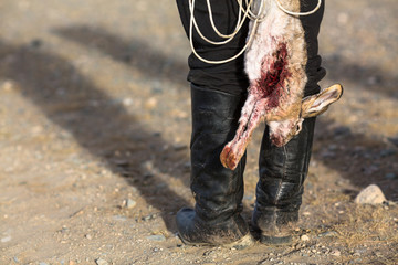 Hunter holding a hunting trophy dead bloody rabbit..